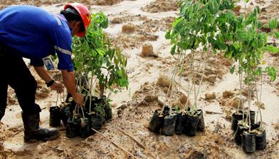 Peringatan Hari Lingkungan Hidup oleh Jhonlin Group