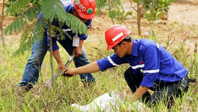 Peringatan Hari Lingkungan Hidup, Jhonlin Group, Kalimantan selatan