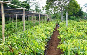 Edukasi, Jhonlin Group, Batulicin, Kalimantan Selatan, H Isam, h-isam