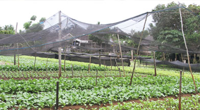 Jhonlin Group, Jalan-jalan bro, Tanah bumbu, Kalimantan Selatan, Batulicin, h isam