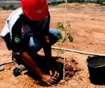 Jhonlin Group, Go Green, Reklamasi, SHE, Batulicin, Tanah Bumbu, Kalimantan Selatan