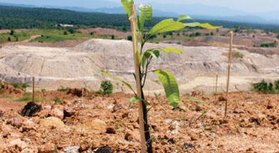 Jhonlin Group, SHE, Penghijauan, Go Green, Reklamasi, Batulicin, Tanah Bumbu, Kalimantan Selatan
